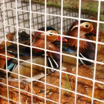 Bild der Dankstelle Kleintierzuchtverein C75 Kirchheim