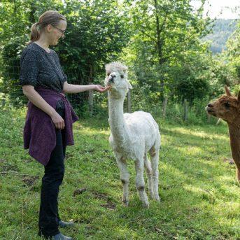 Bild der Dankstelle Alpakafarm Hirtenaue